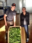My sister Gina and I admiring the fresh basil leaves delivered for harvest