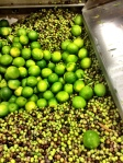 Limes used to make a lime flavored olive oil