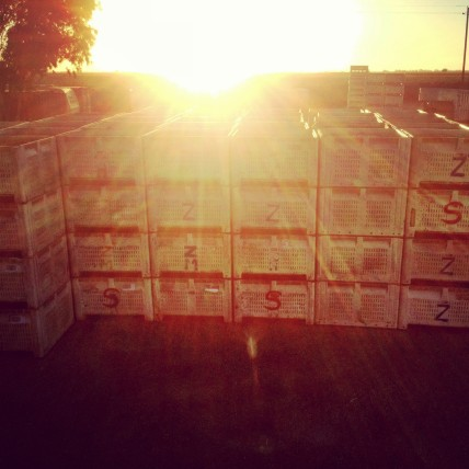 Empty bins ready for harvest
